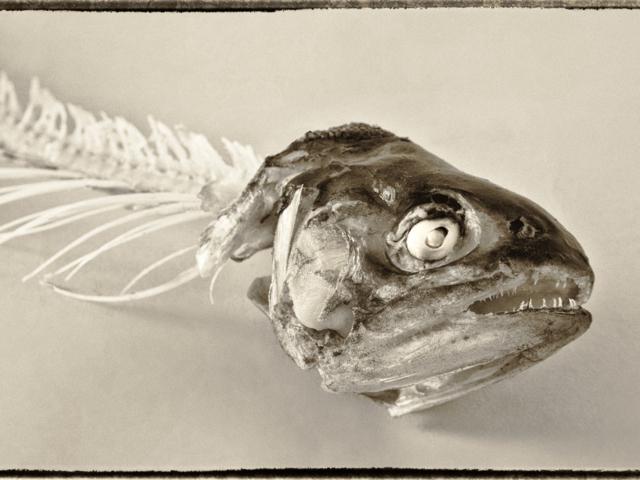 Trout-2012