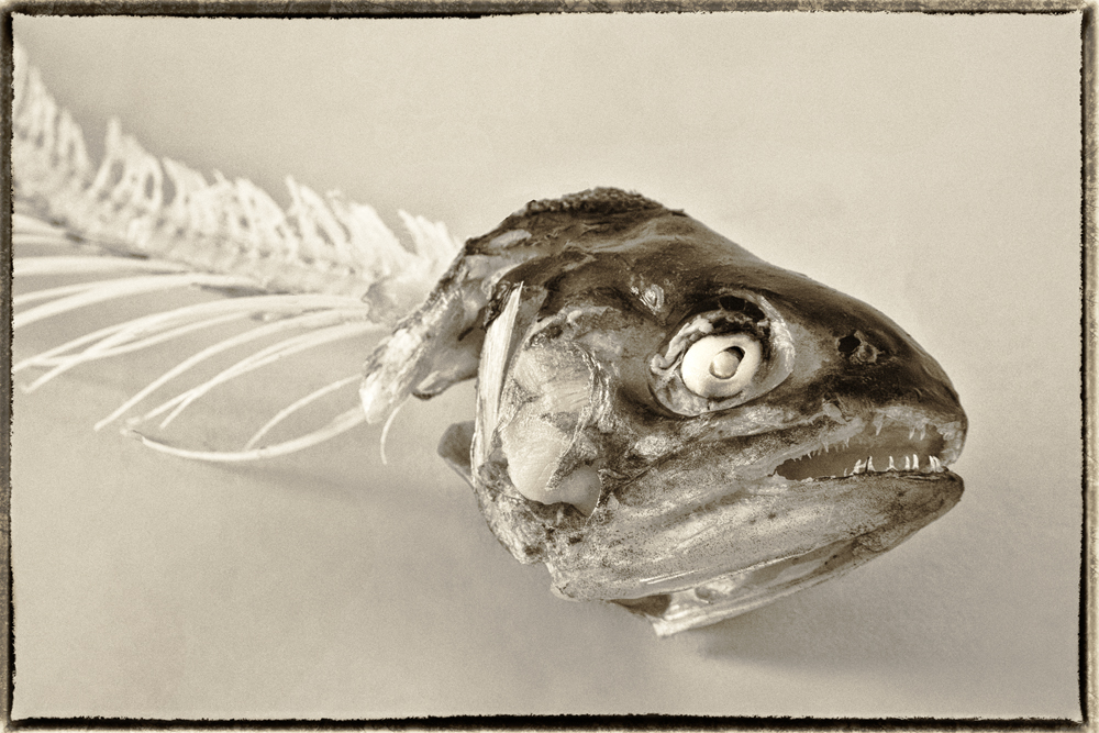 Trout 2012