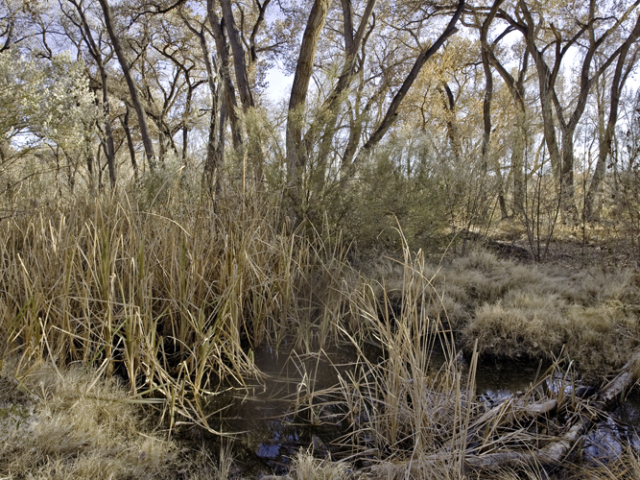 Bosque-New-Mexico-2012