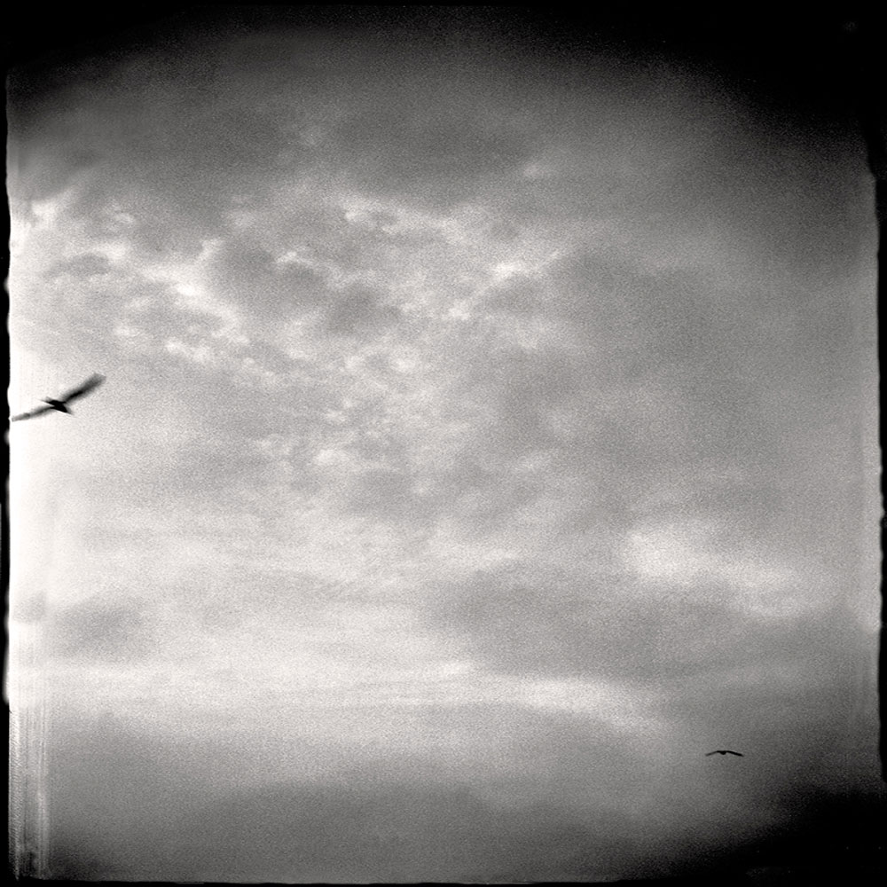 Birds in Flight, Illinois 2000