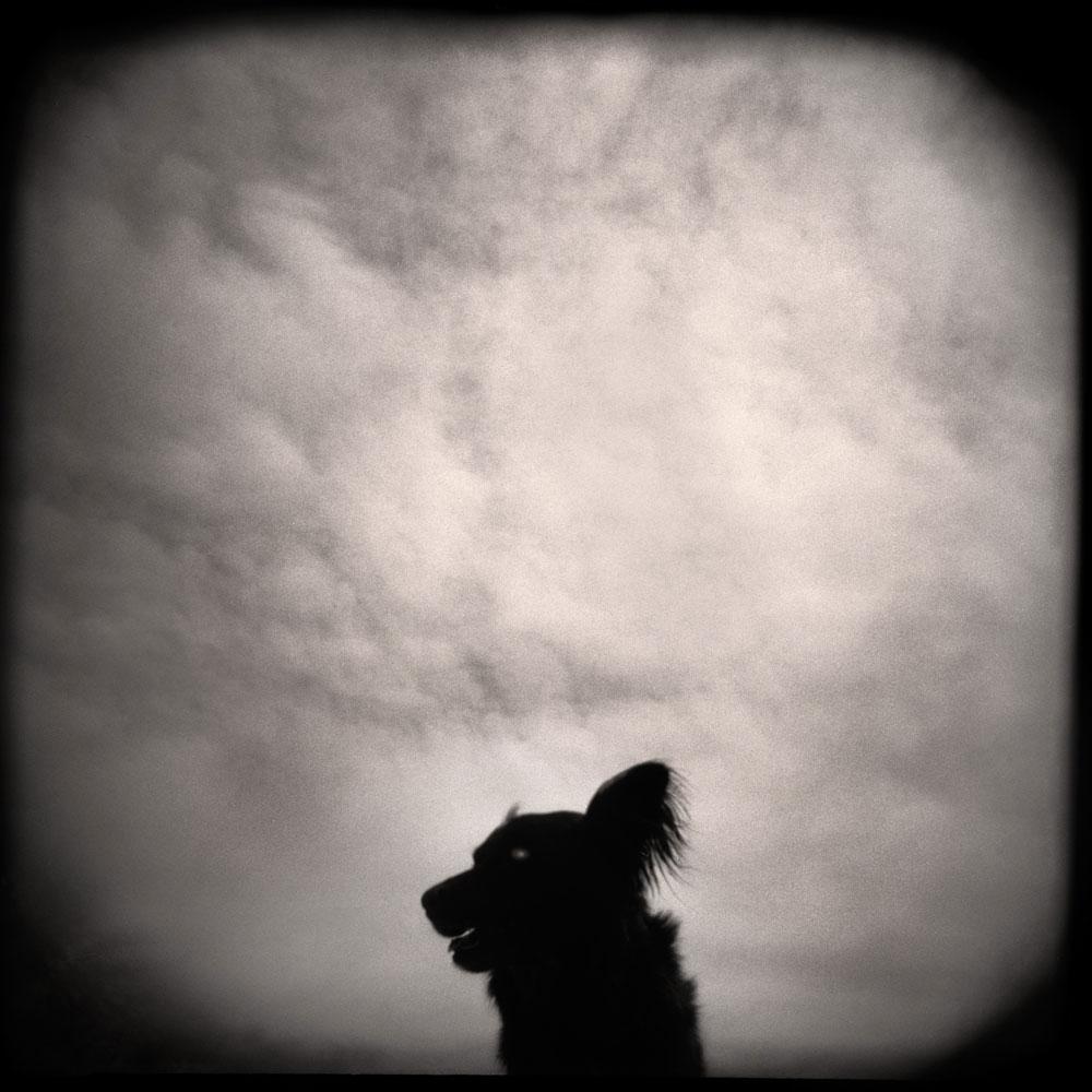 Dog and Clouds, Utah 2002
