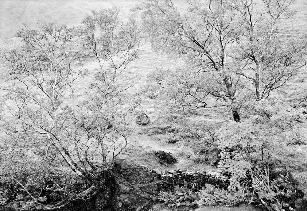 Trees England 1987