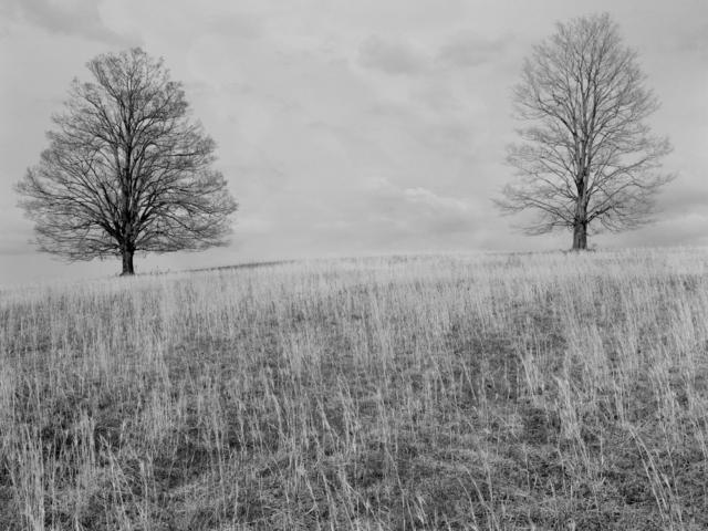 Trees Ohio 1978.