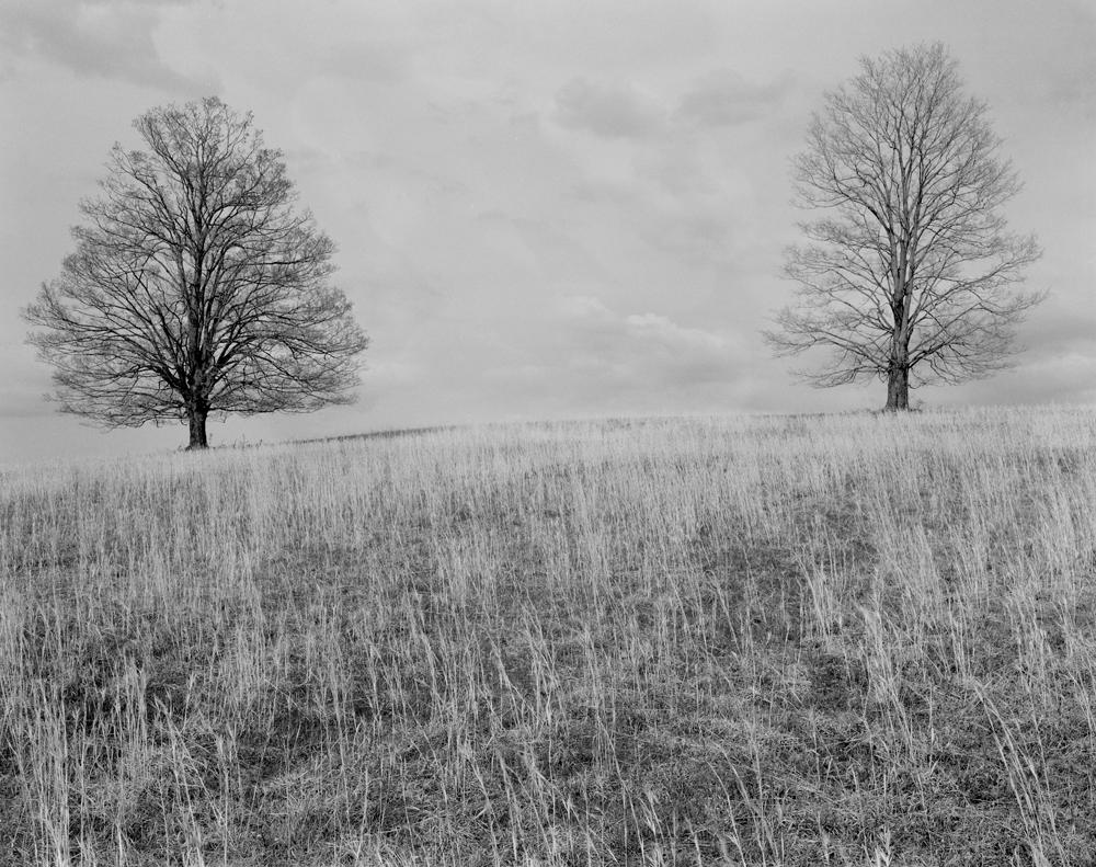 Trees, Ohio 1978