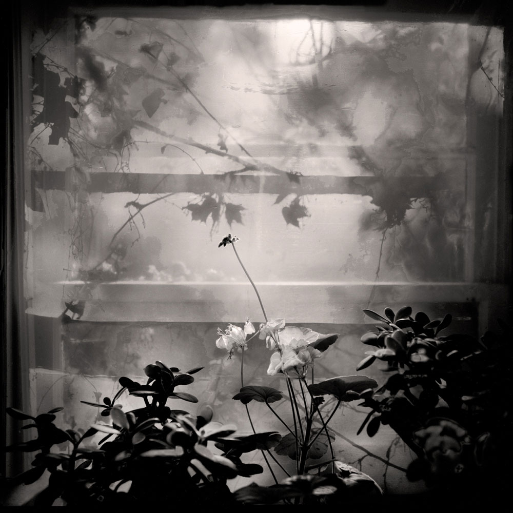 Window and Plants, Illinois 1997