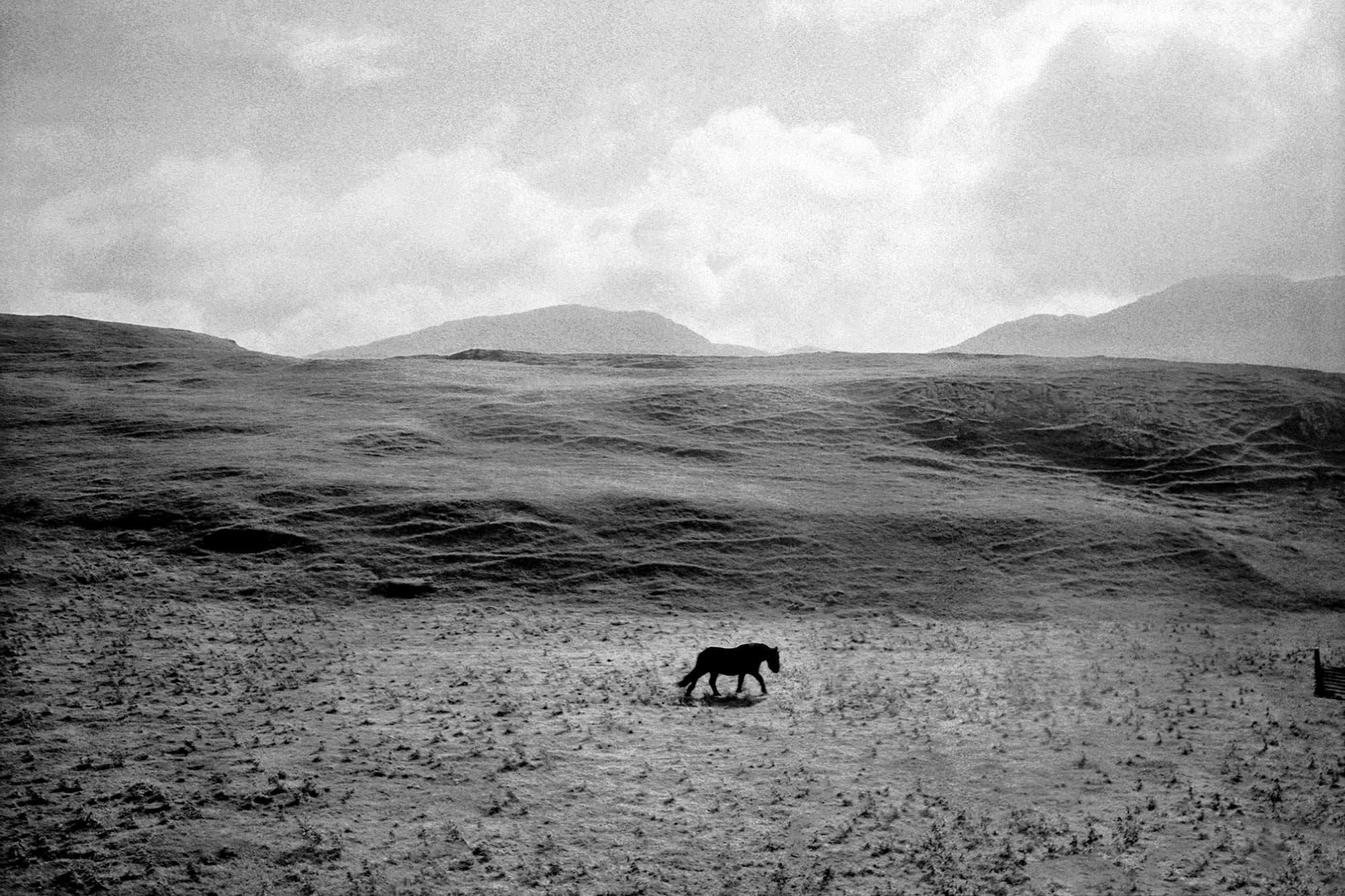 arthur-lazar-Black-Horse-Ullapool
