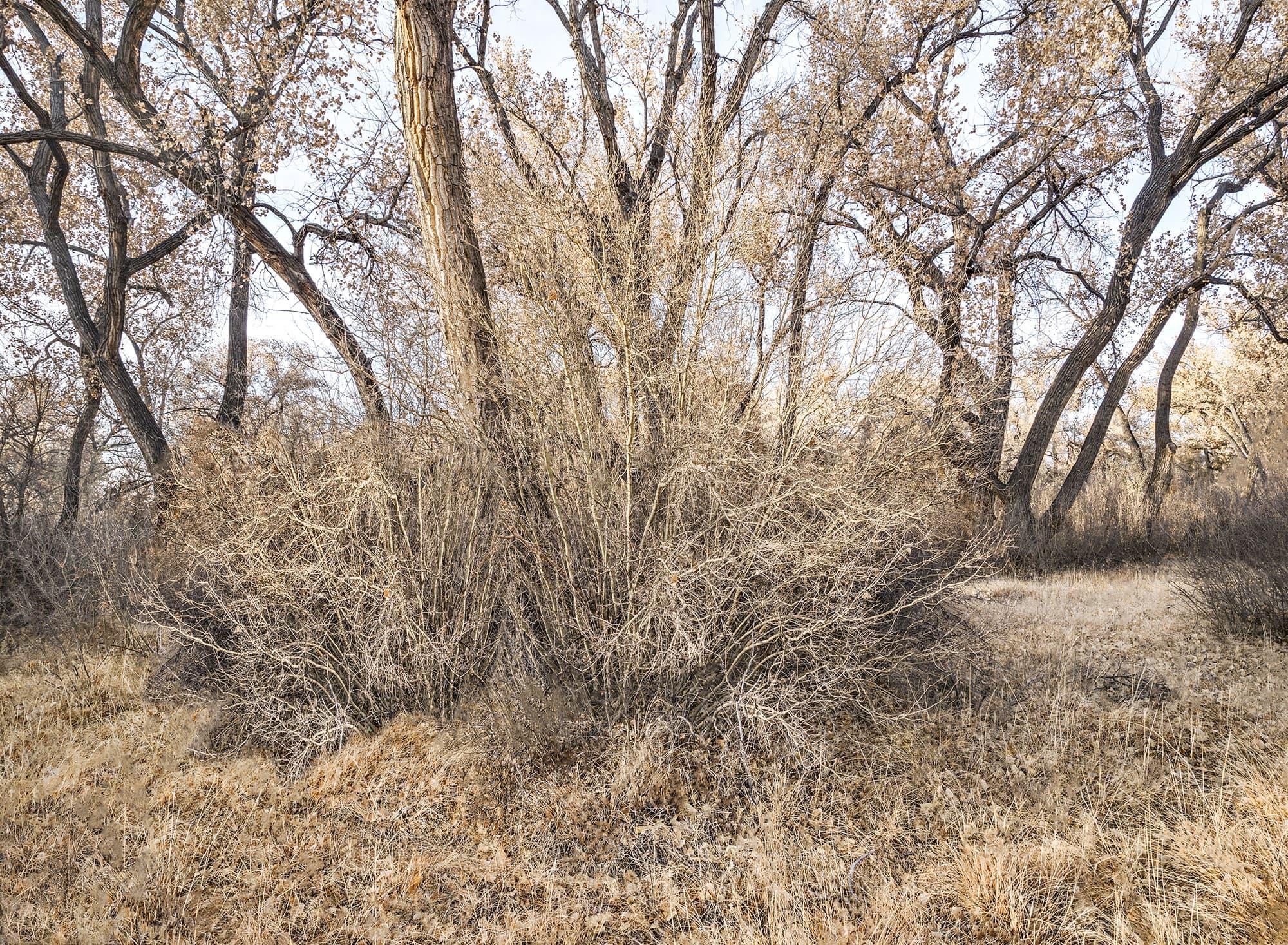 13-Bosque-New-Mexico-2019-arthur-lazar