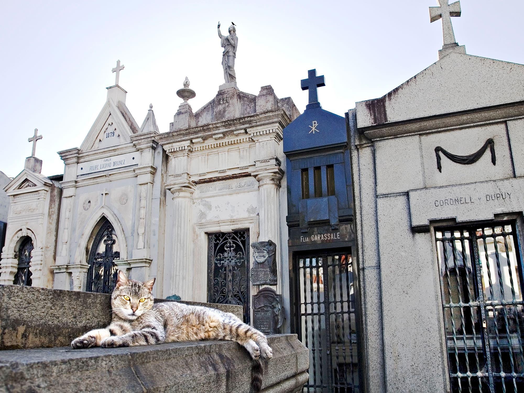arthur-lazar-Ricoleta-Cat-Buenos-Aires-2010