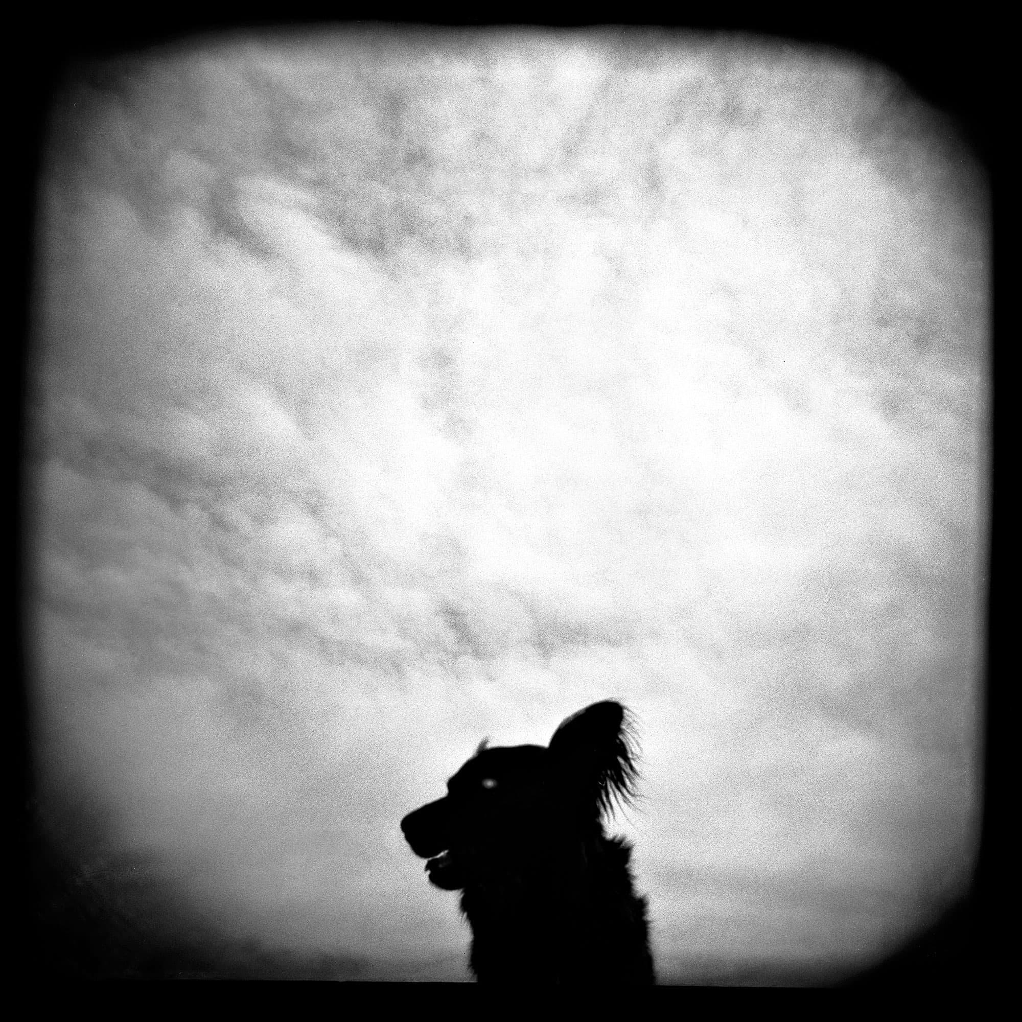 arthur-lazar-Utah-Dog-2000