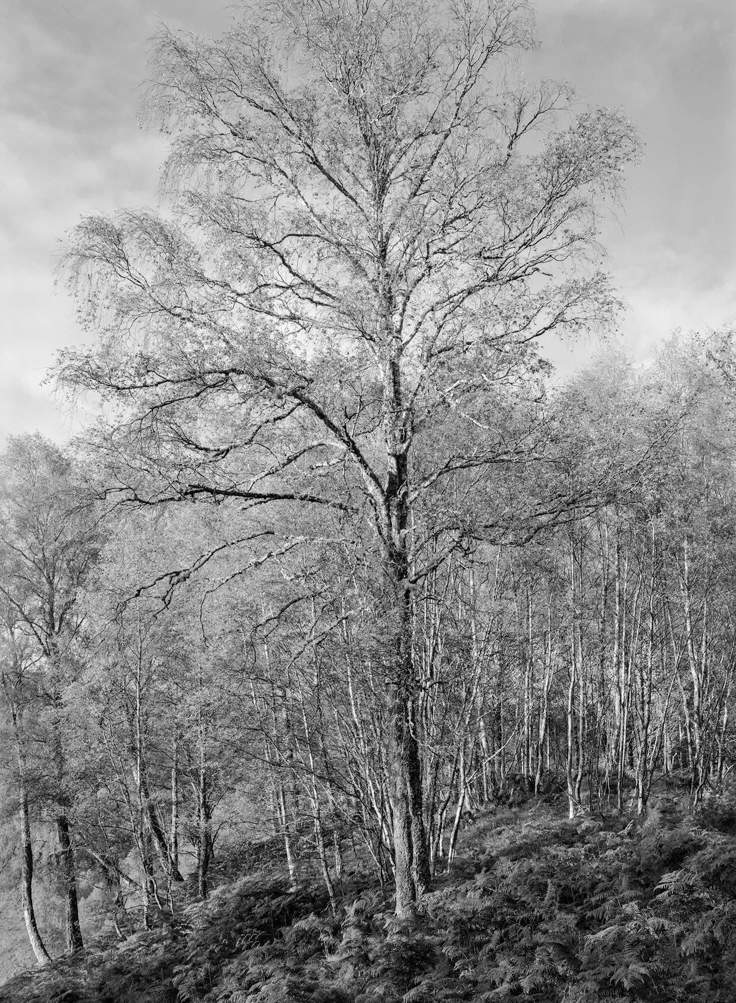 arthur-lazar-Inverness