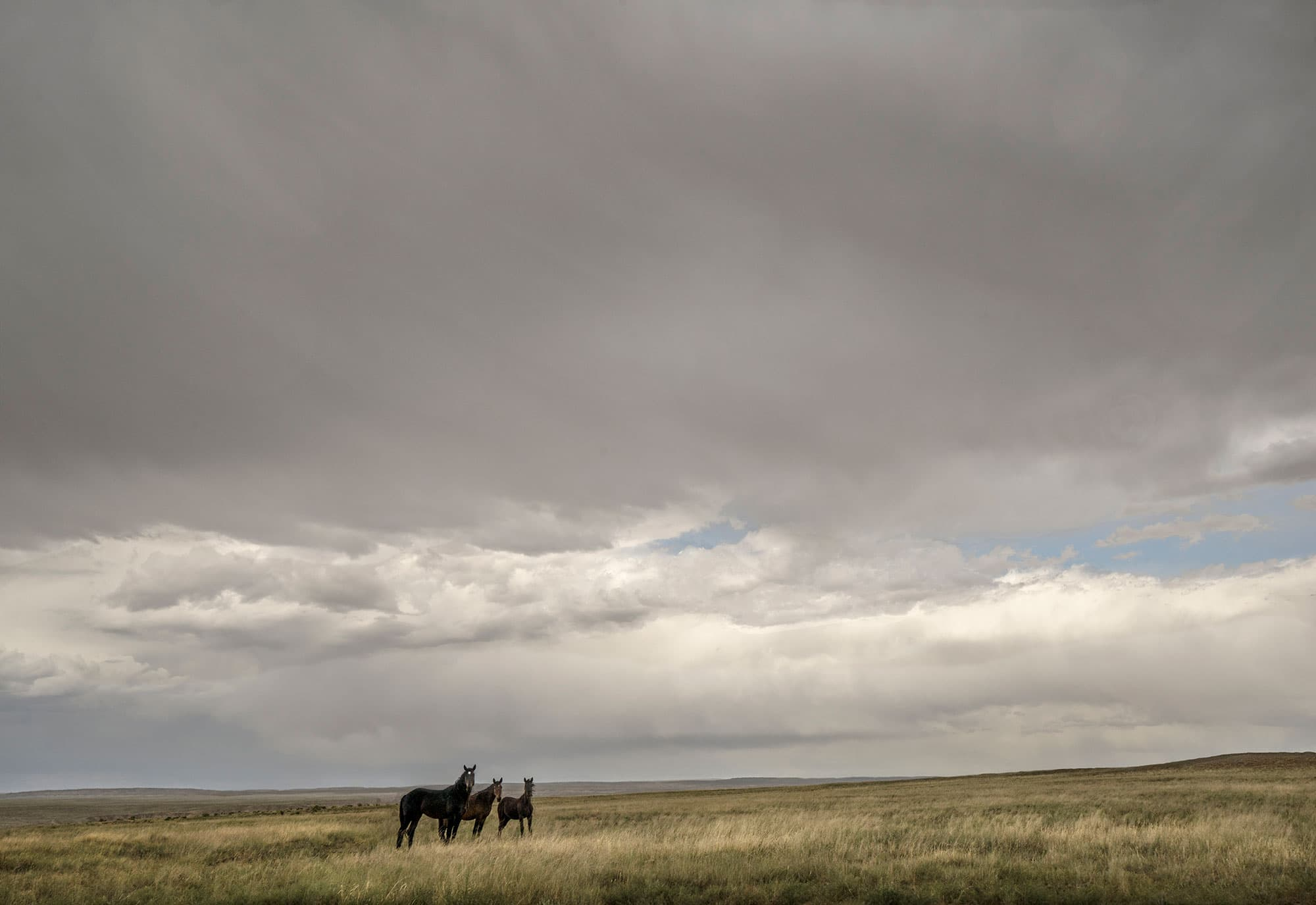 9-Horses-New-Mexico-2019-arthur-lazar