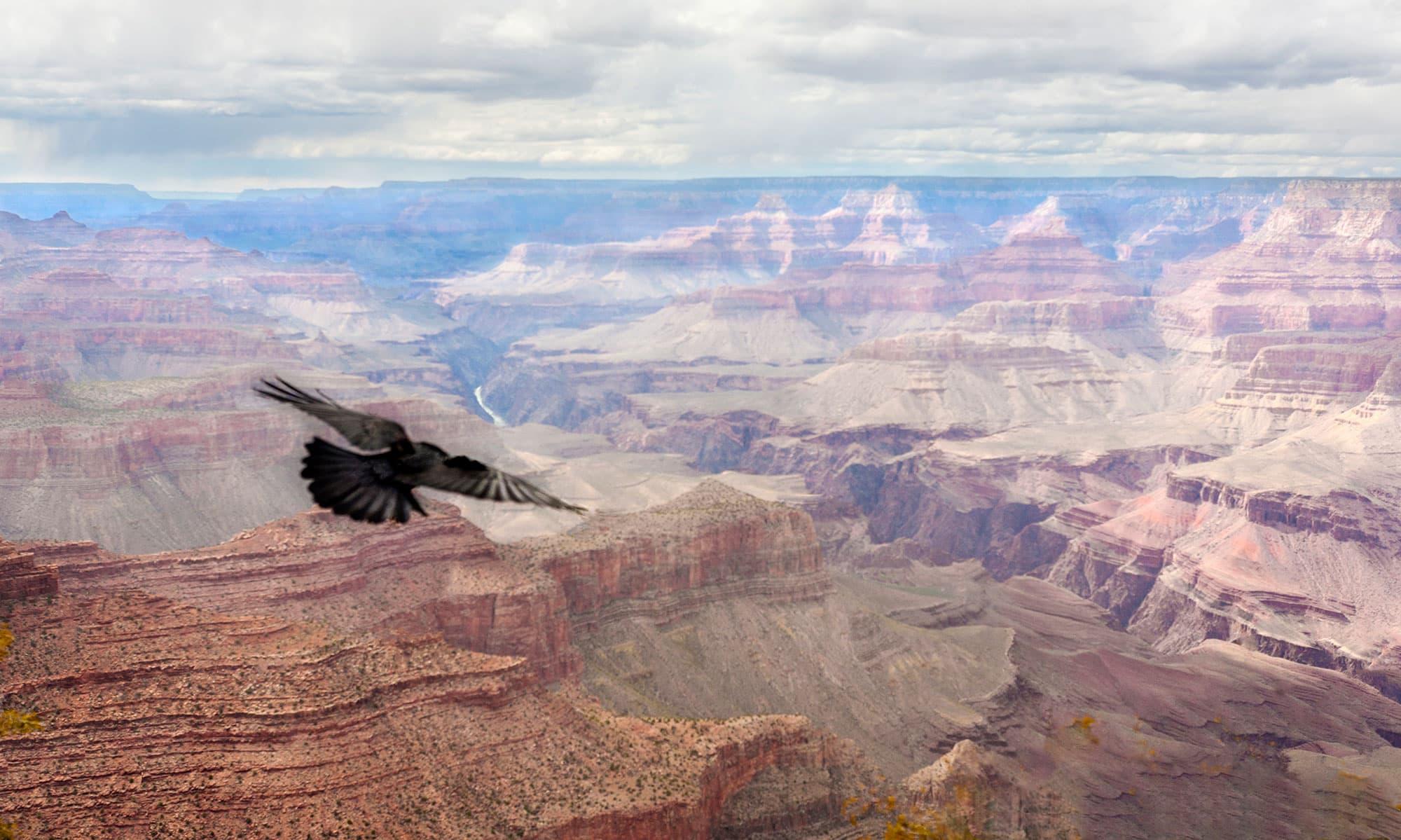 Grand-Canyon-Bird-2011-arthur-lazar